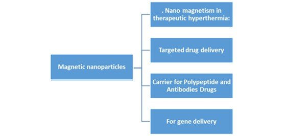 Magnetic nanoparticles - A promising tool for targeted drug delivery system