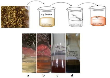 In vitro bio-synthesis of silver nanoparticles using flower extract of parasitic plant Cascuta reflexa and evaluation of its biological properties