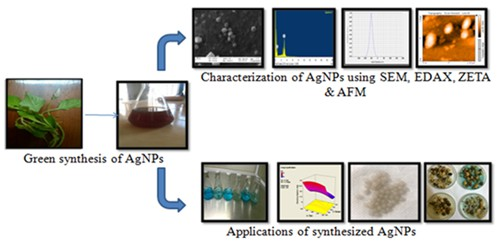 Optimized synthesis of AgNPs using aqueous extract of celosia argentea and its practical implications on textile dye decolorization