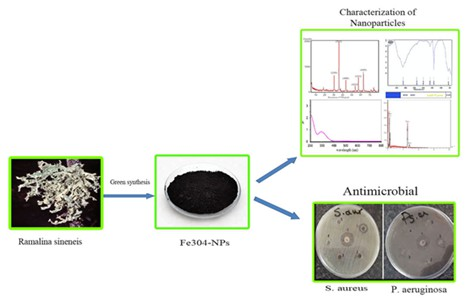 The study of antibacterial properties of iron oxide nanoparticles synthesized using the extract of lichen Ramalina sinensis