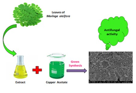 Antifungal activity of biosynthesized CuO nanoparticles using leaves extract of Moringa oleifera and their structural characterizations