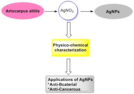 Cyto-toxicity and oligodynamic effect of bio-synthesized silver nanoparticles from plant residue of Artocarpus altilis and its spectroscopic analysis