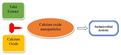 Biosynthesis of calcium oxide nanoparticles using Ocimum sanctum (Tulsi) leaf extracts and screening its antimicrobial activity